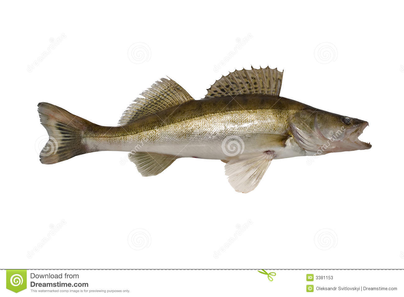 Fish zander stock image image of isolated carp fillet for Image of fish