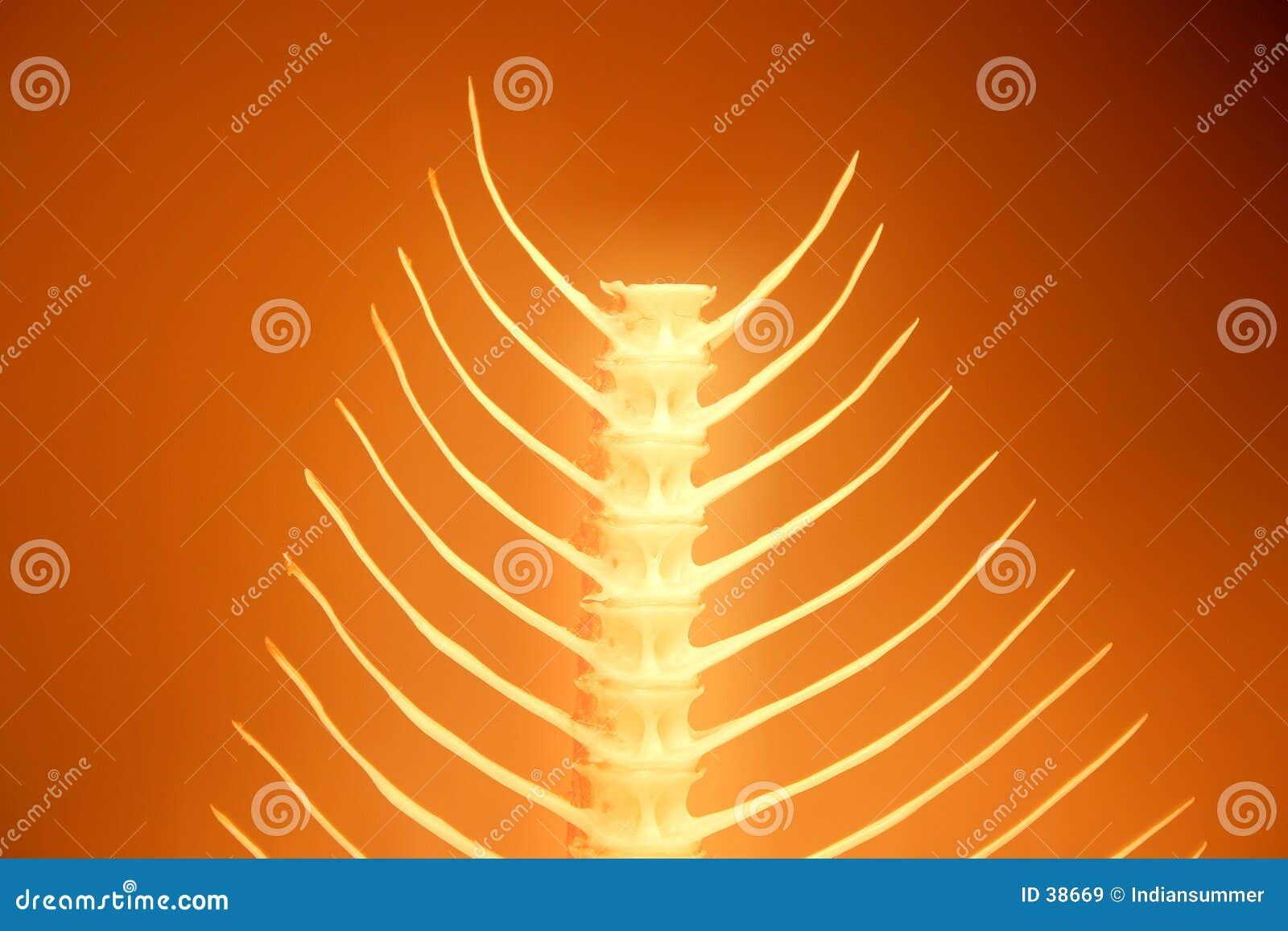Fishbone series