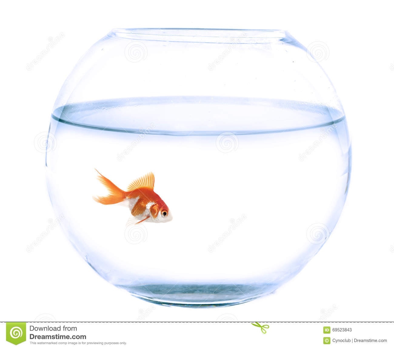 Fishbowl for Achat poisson rouge 92