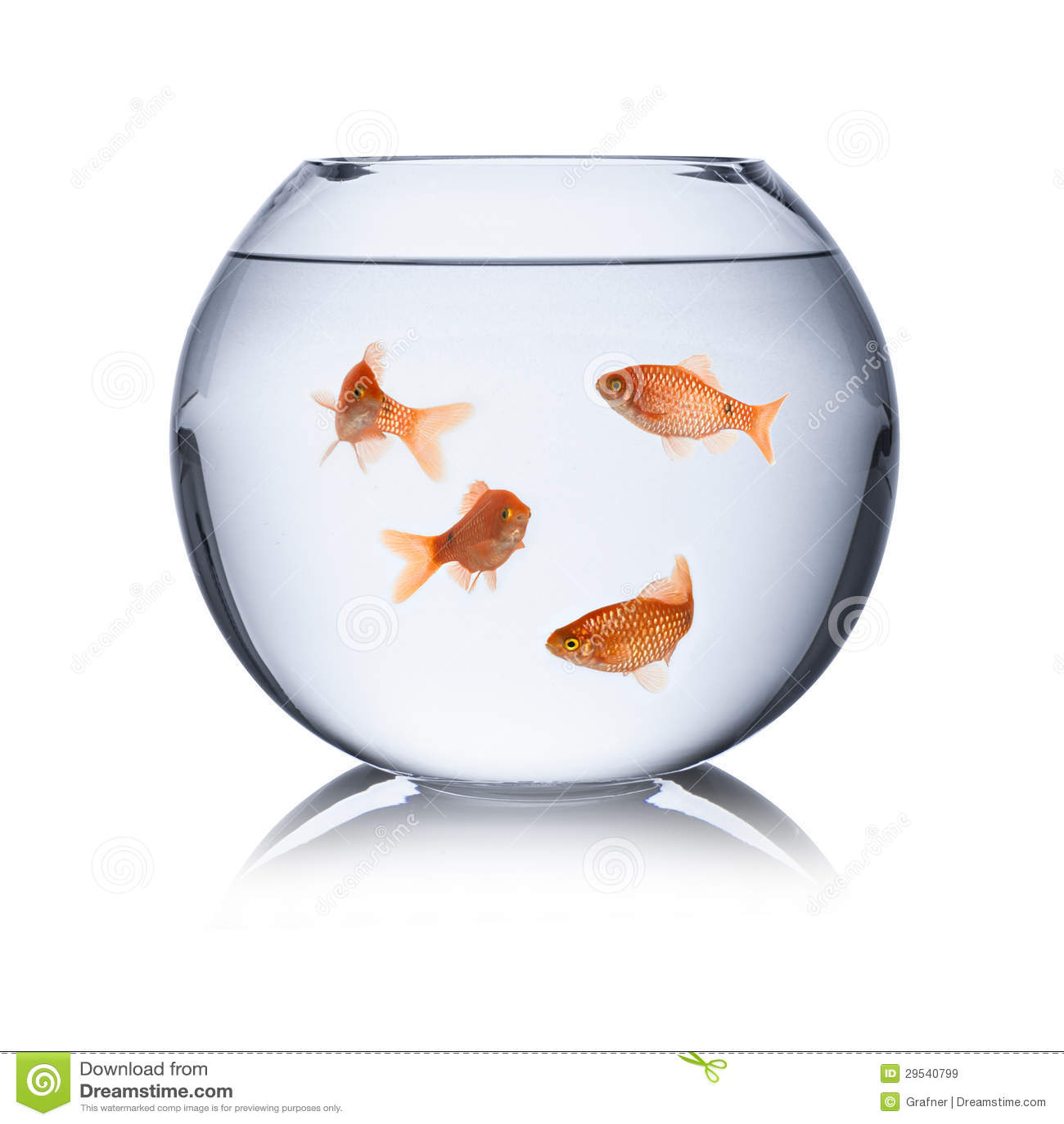 Fishbowl stock image image of bowl rosy fish motion for Aquarium bocal poisson