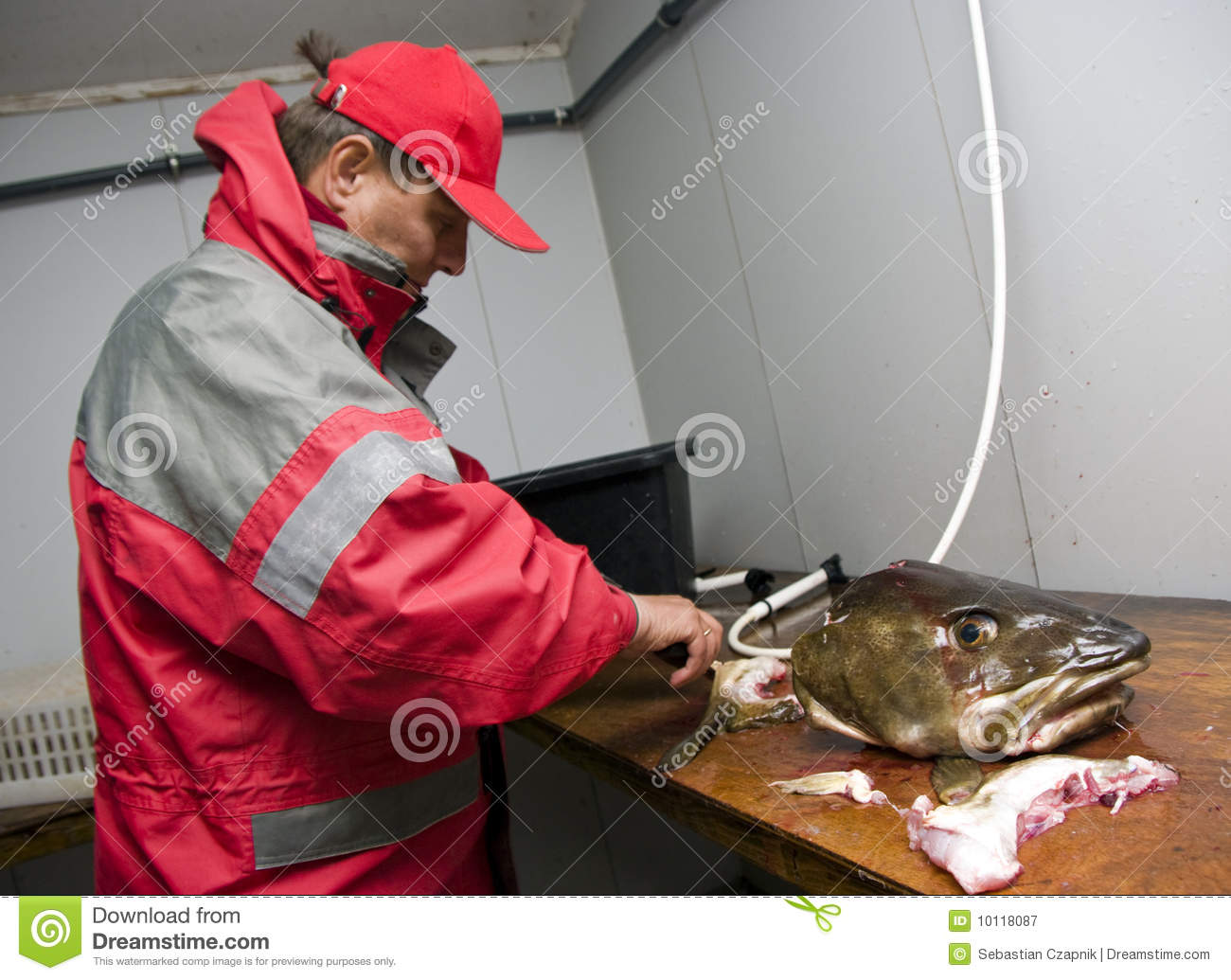 Fisherman filleting cod