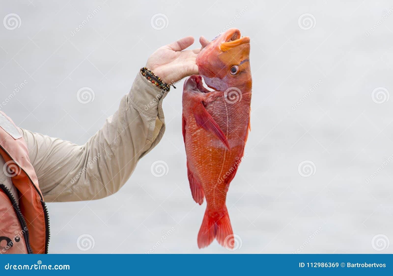 Fisherman shows fresh caught fish