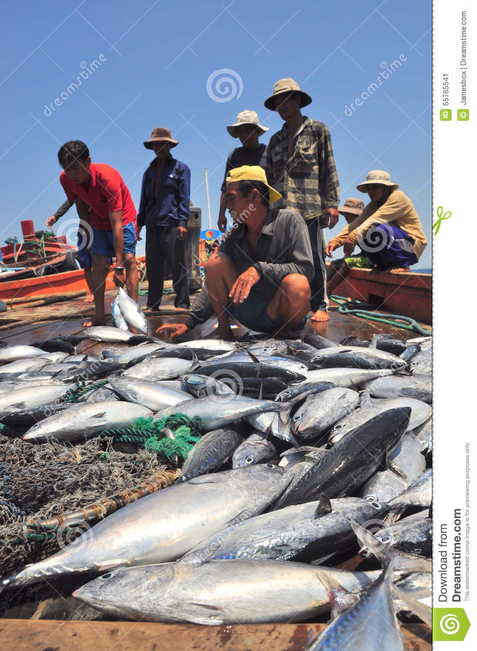 Fishermen are collecting tuna fish caught by trawl nets in for Tuna fishing videos