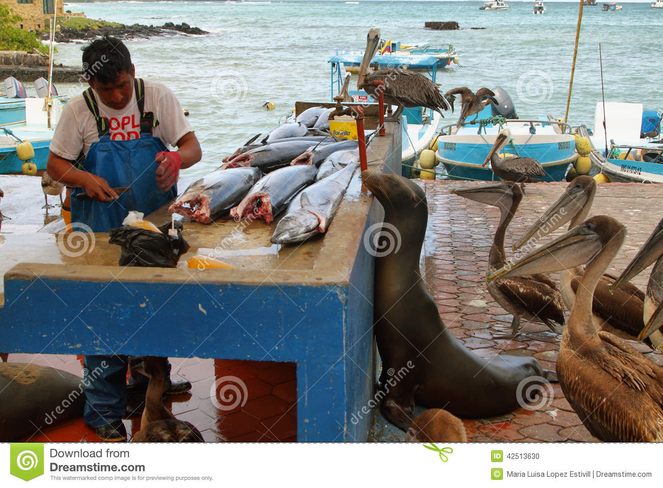 puerto ayora men Galapagos expedition journal: face to face  we also visit puerto ayora,  retreating into their shells probably made it only easier for a team of burly men to.