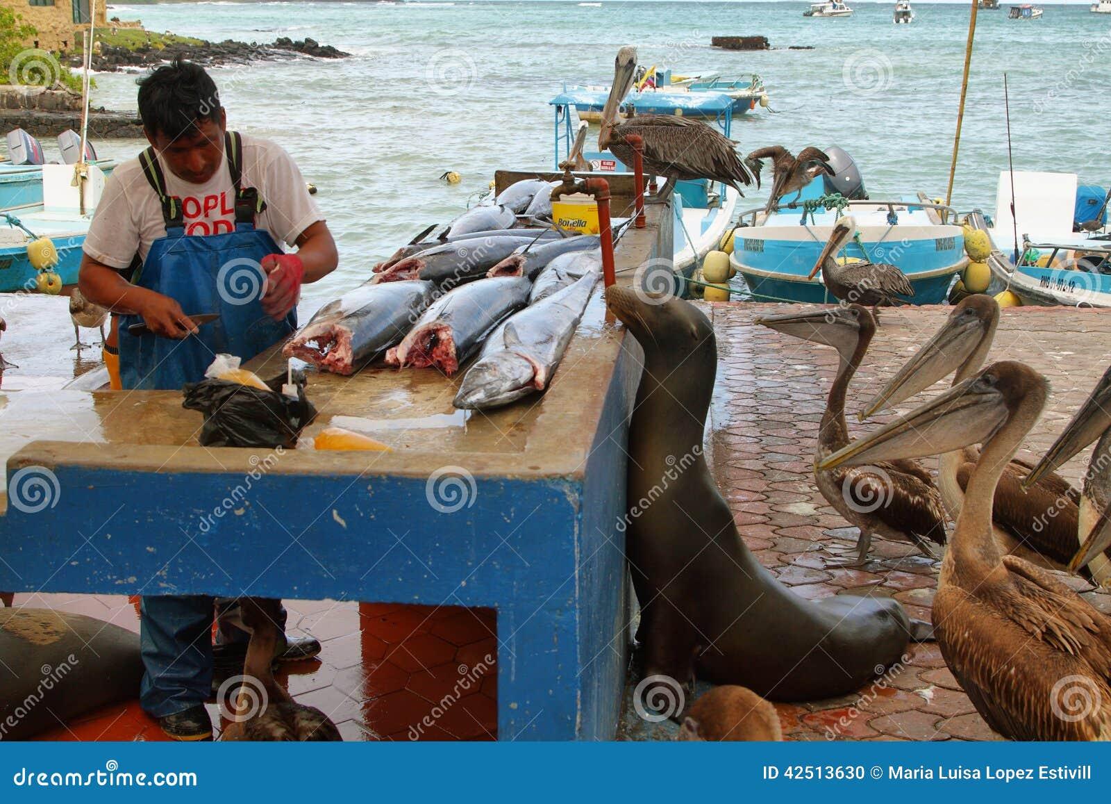 Fishermen dock in puerto ayora santa cruz editorial image for Fishing in ecuador