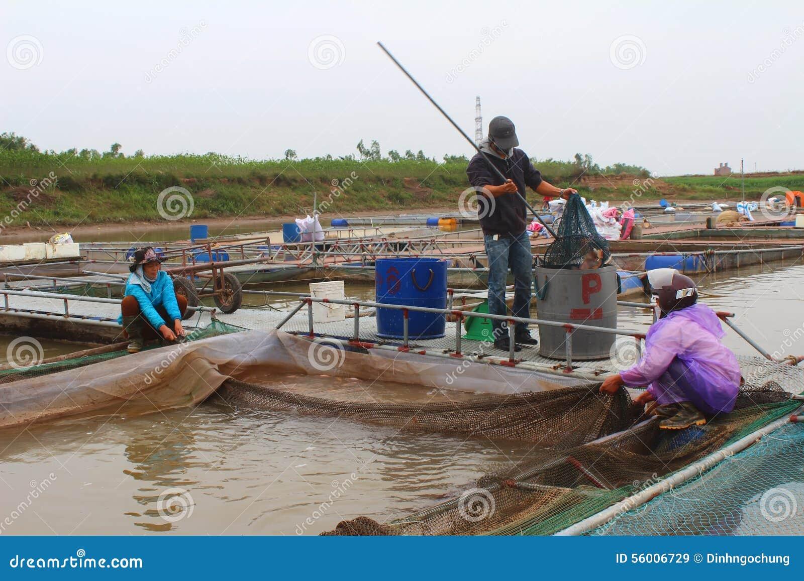 Fishermen and fish farm in river editorial stock image for Fish river tree farm