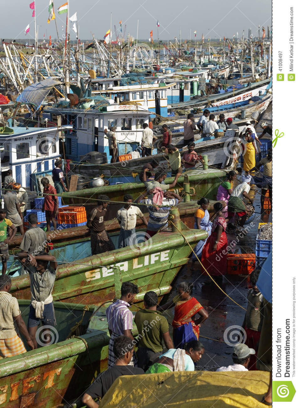 The Fishermen Transferring The Fresh Catch From Boats For Road