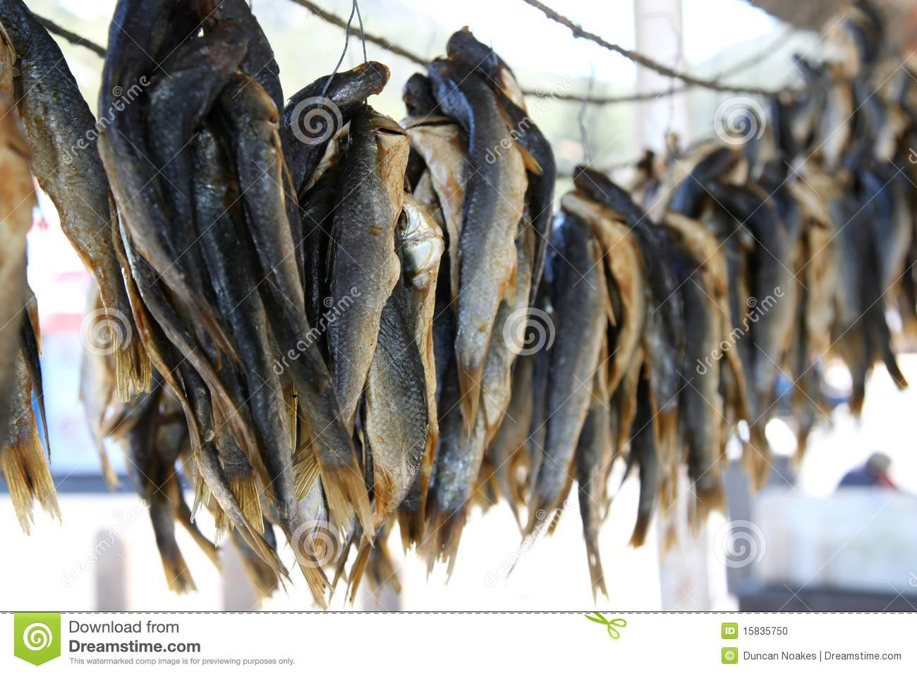 Fishes drying stock photo image 15835750 for Eating mullet fish