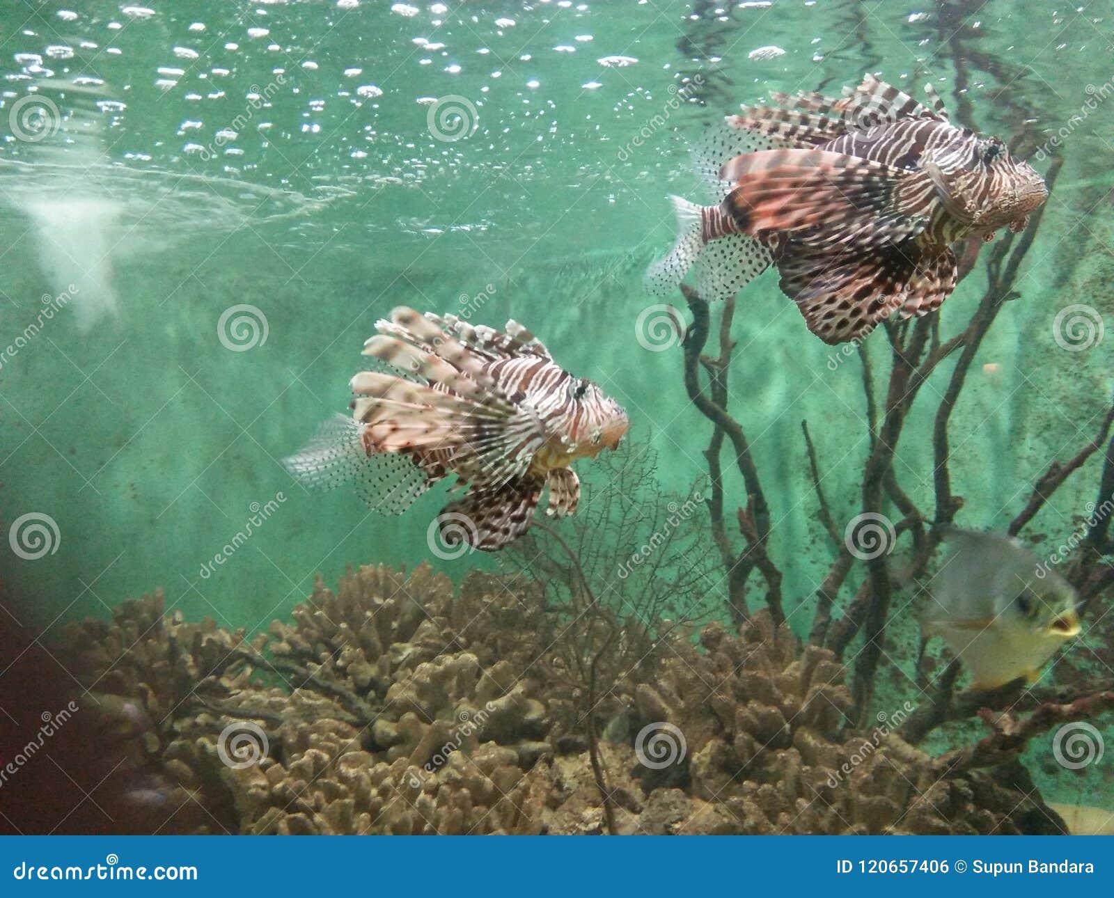 Beautiful Fishes In Srilankan National Zoo in Dehiwala