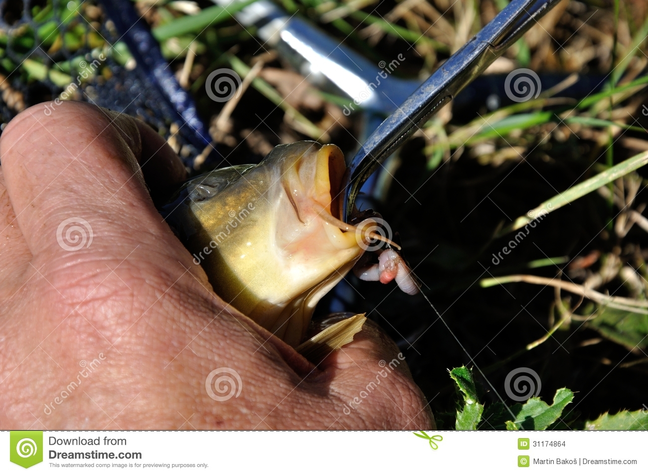 Fishhook removal stock images image 31174864 for Removing fish hook