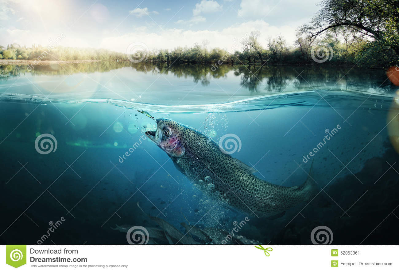 Download Fishing background stock image. Image of fish, poster - 52053061