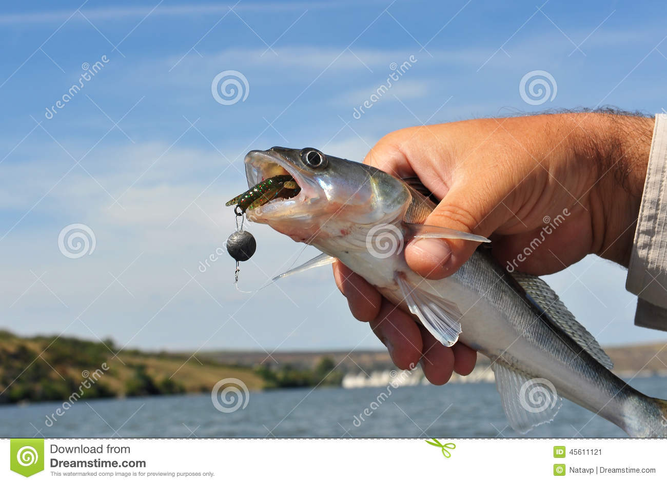 fishing bait in the fish's mouth stock photo - image: 45611121, Fishing Bait