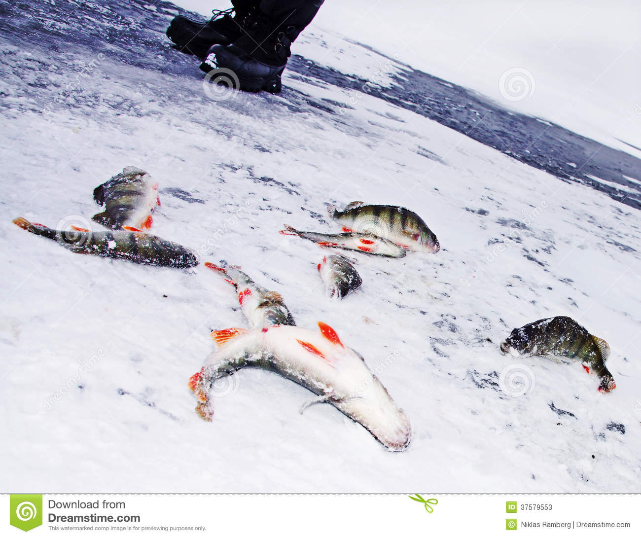 Fishing bass through ice stock image image of fish for Ice fishing for bass