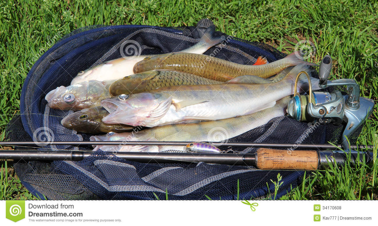 Fishing catch on the grass and fishing gear royalty free for Free fishing stuff