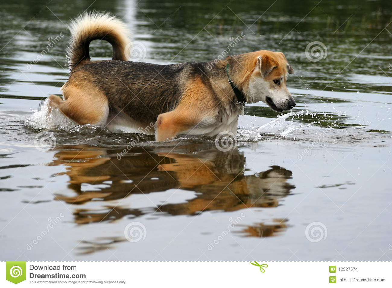 Fishing dog stock images image 12327574 for Fish for dogs
