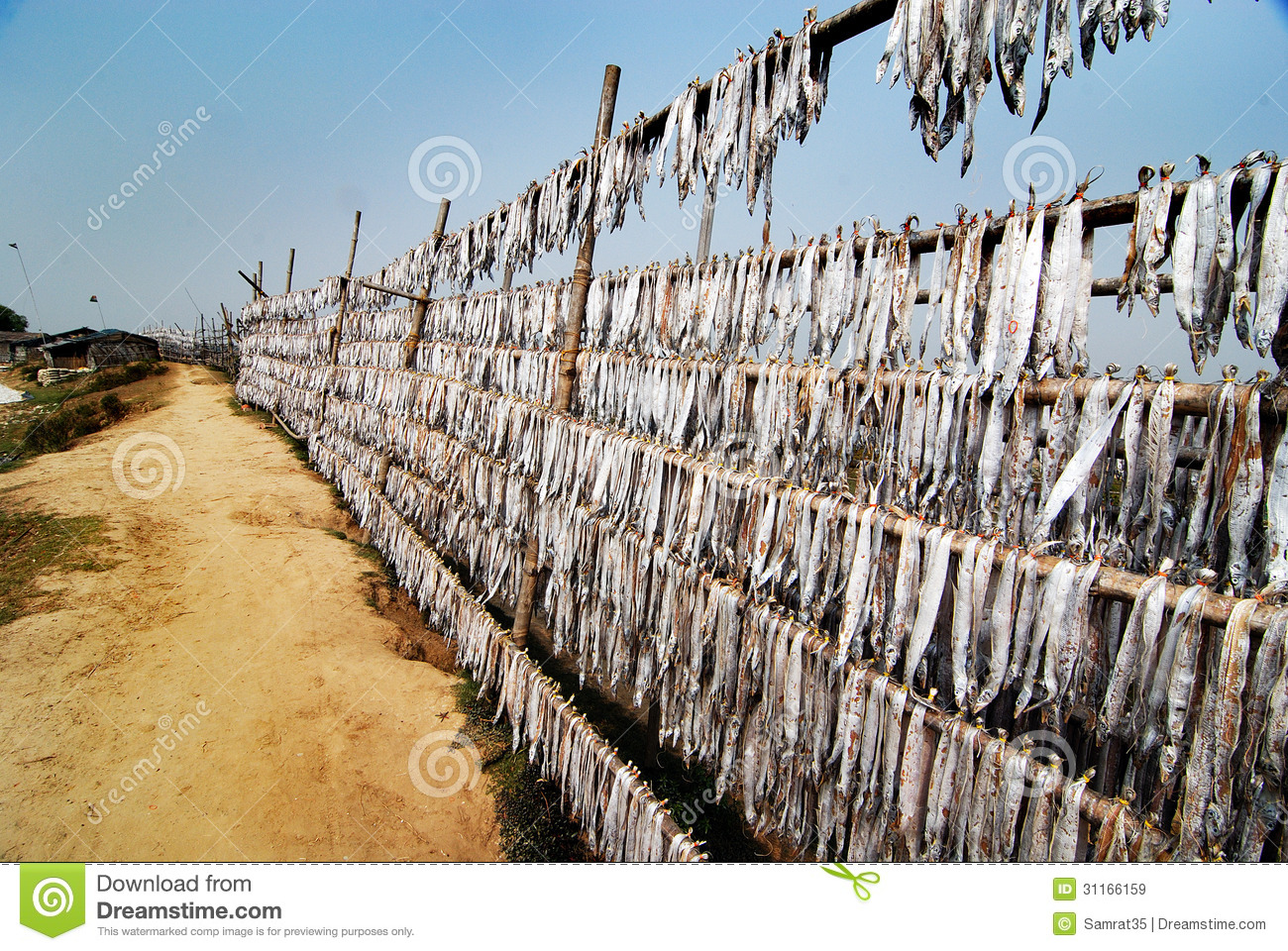 Digha India  City pictures : ... ,India,Asia Drying sea fishes on the beach at Junput Digha India