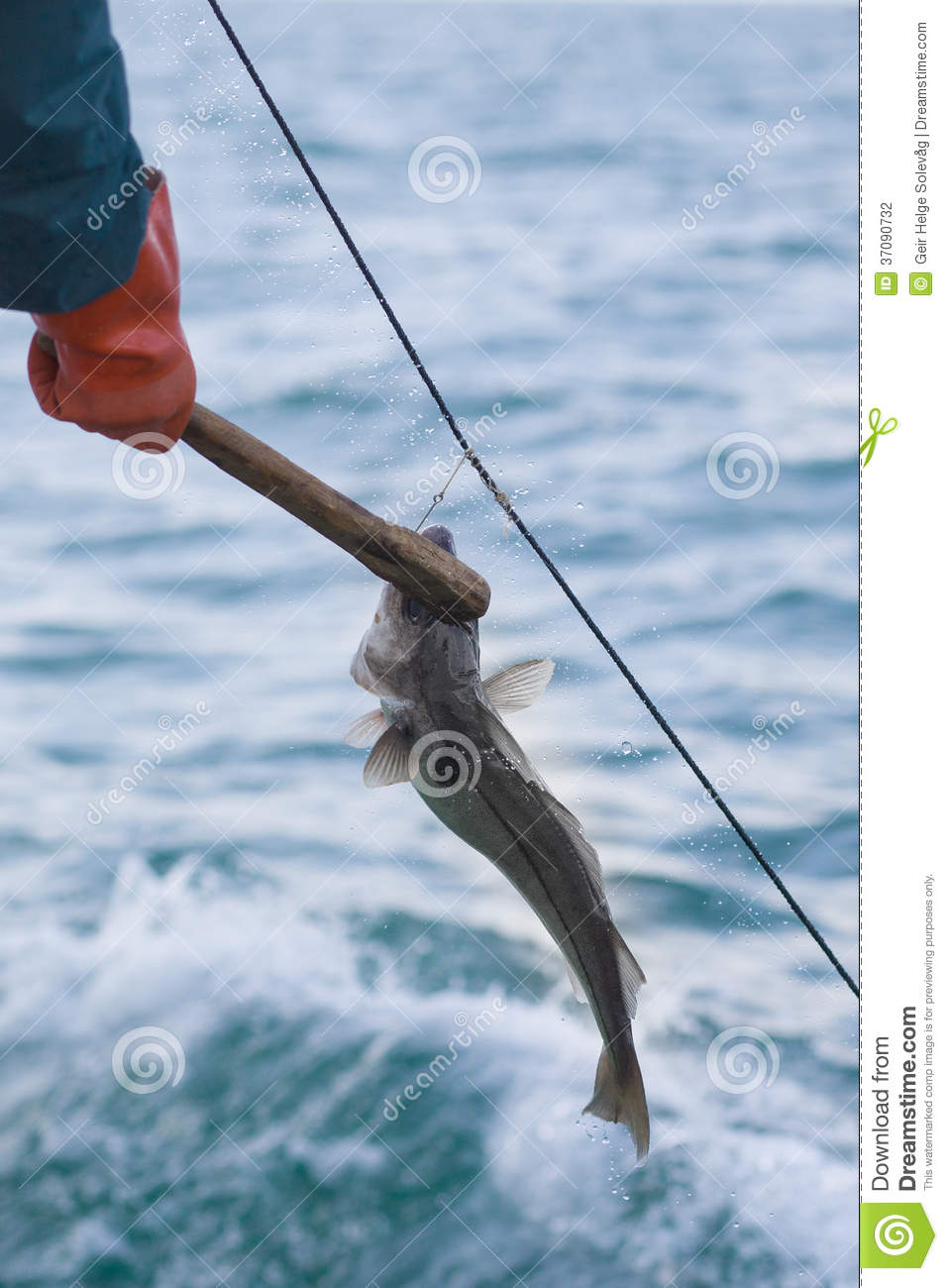 Fishing with longline stock photo image of tourist coast for Long line fishing