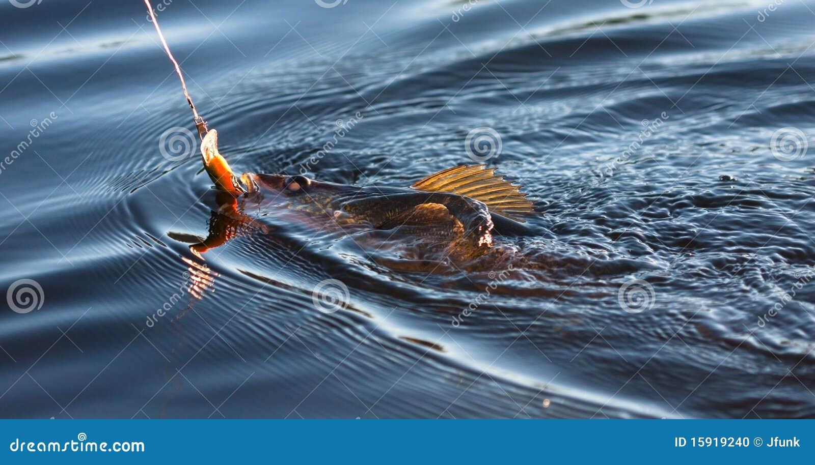 Fishing for Pickerel