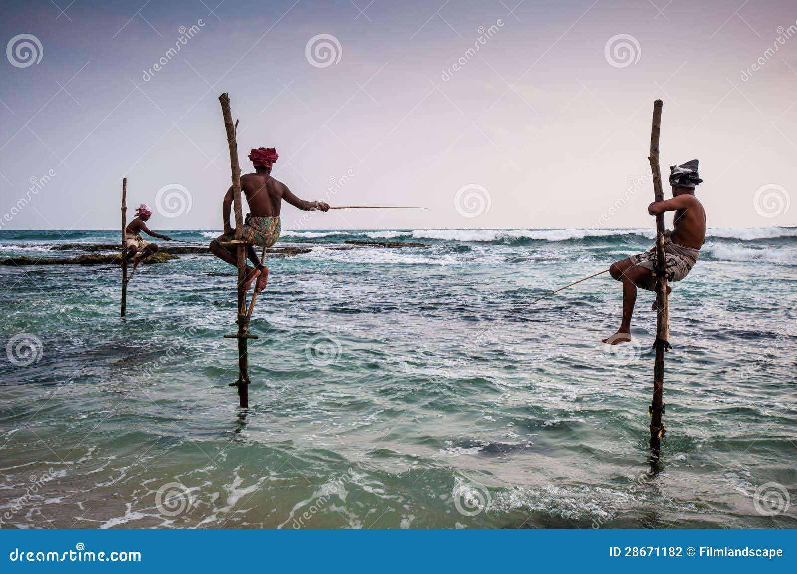 In sri lanka local fishermen are fishing in unique style for Sri lanka fishing