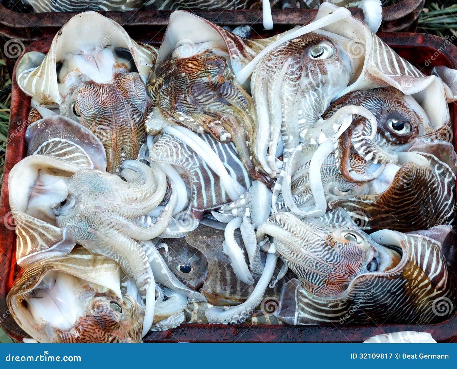 Fishmarket In Kochi India Royalty Free Stock Photography