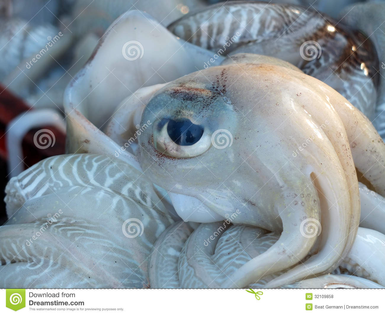 Fishmarket in kochi india stock photo image of fishes for Chinese fish market near me