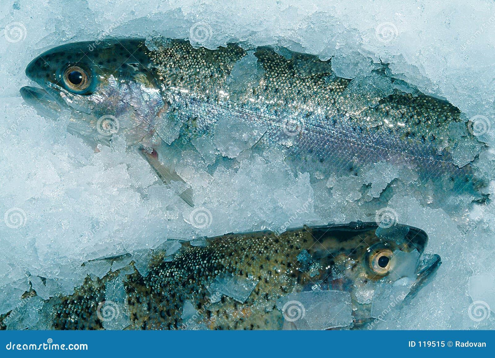 Fishs