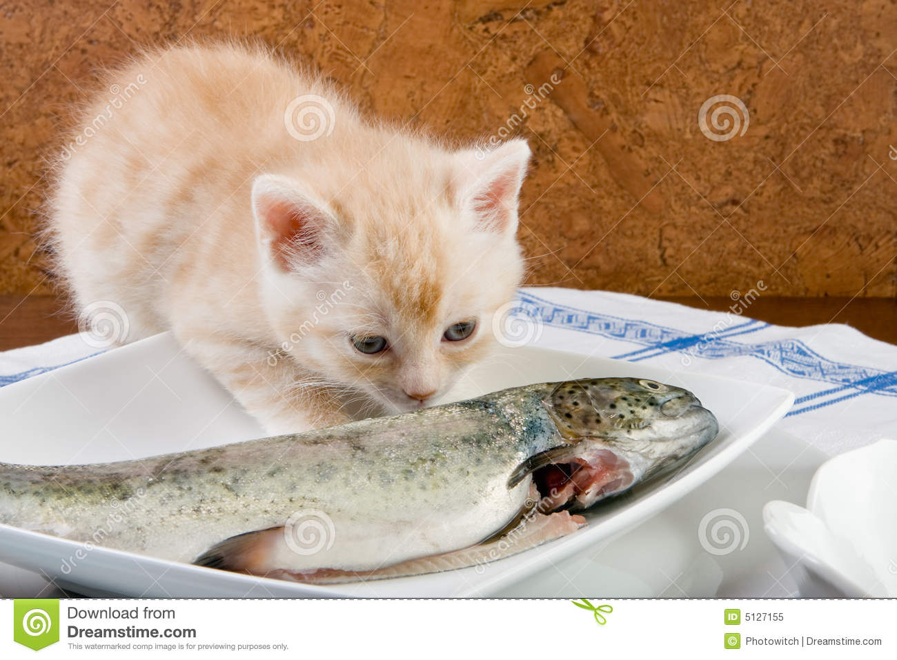 Fishy smell stock image image of cute curious animal for Why does my pee smell like fish