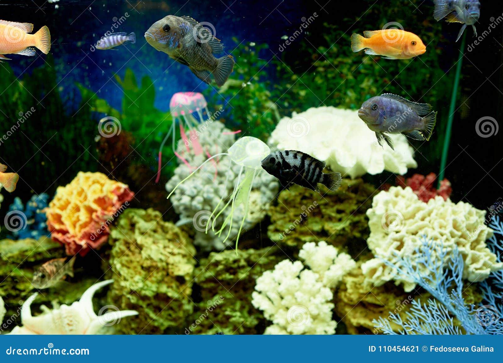 Fisk i akvariet, blått vatten Drömmar av havet utgångspunkten kopplar av