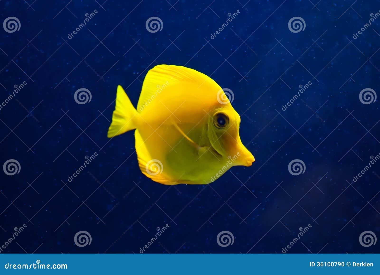Fisk i havet