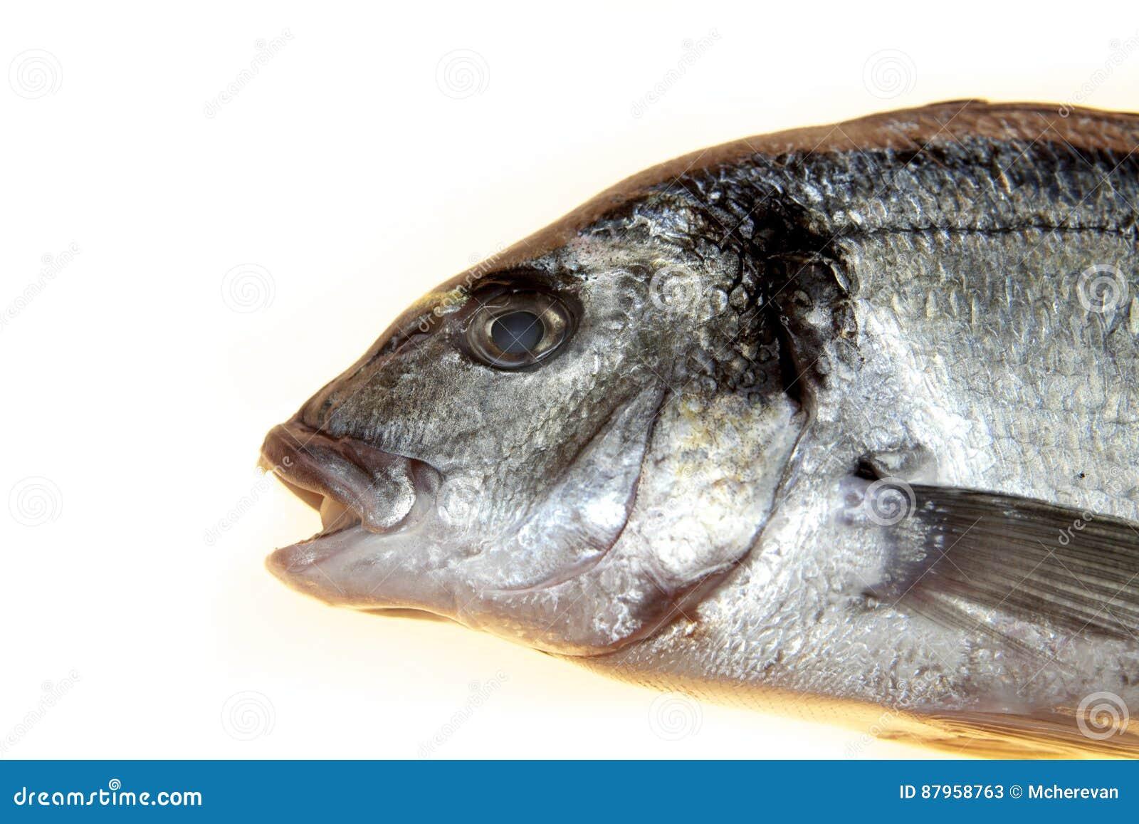 Fiska closeupen för havsbasen på en vit bakgrund Medelhavs- läcker ny fisk