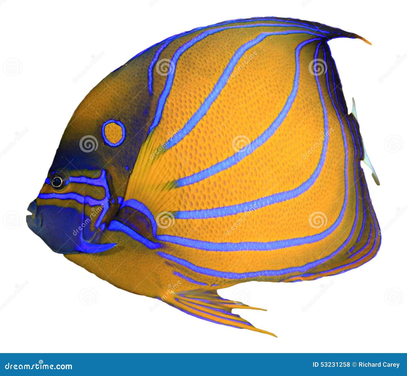 Fiska isolerat tropiskt