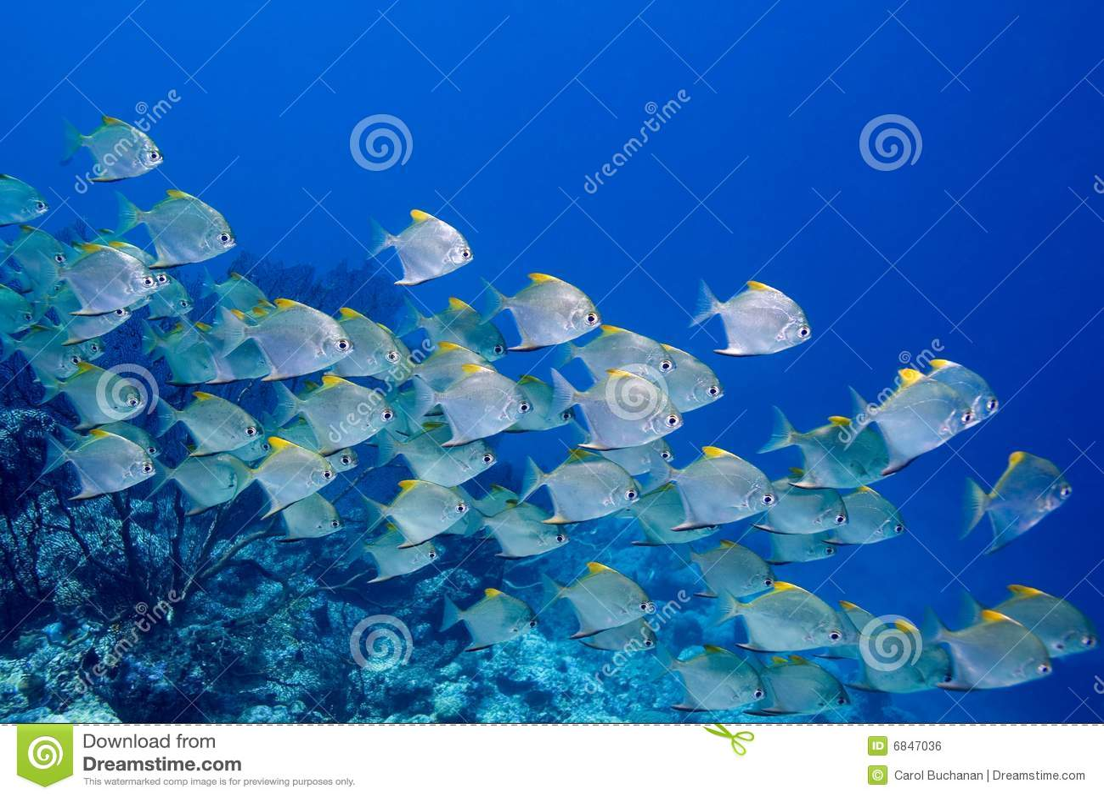 Fiska skolan