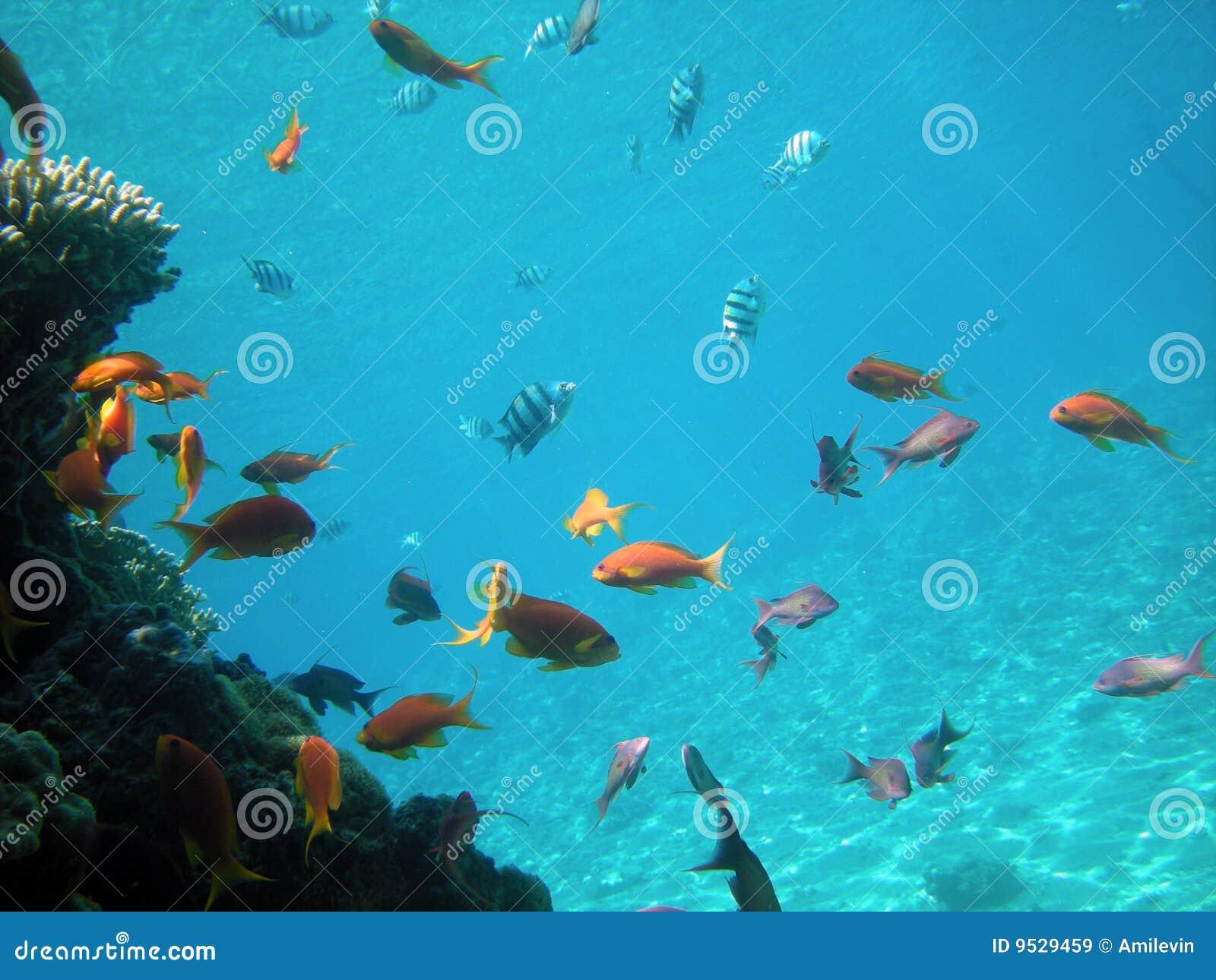 Fiska tropiskt