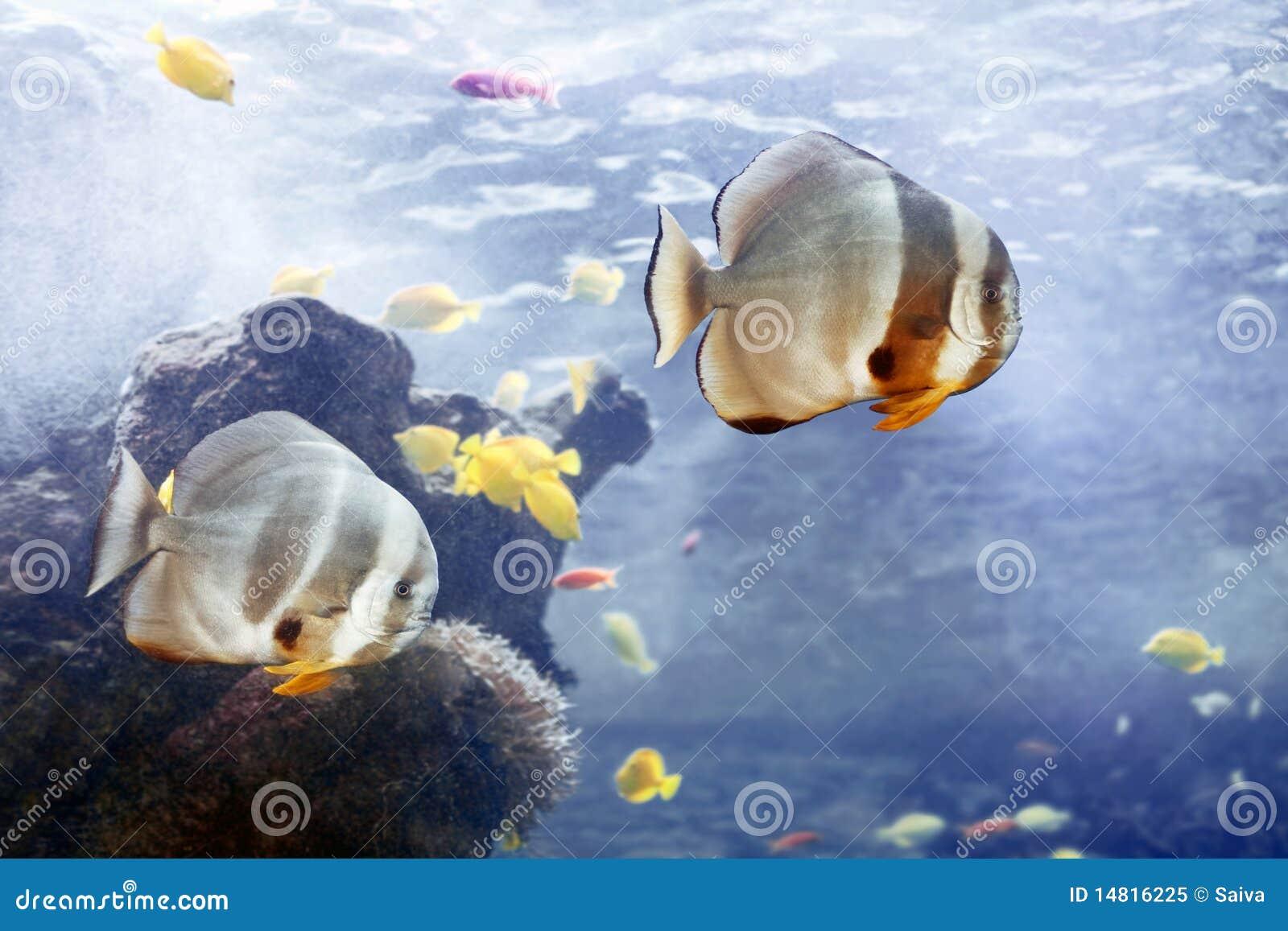 Fiskar tropiskt