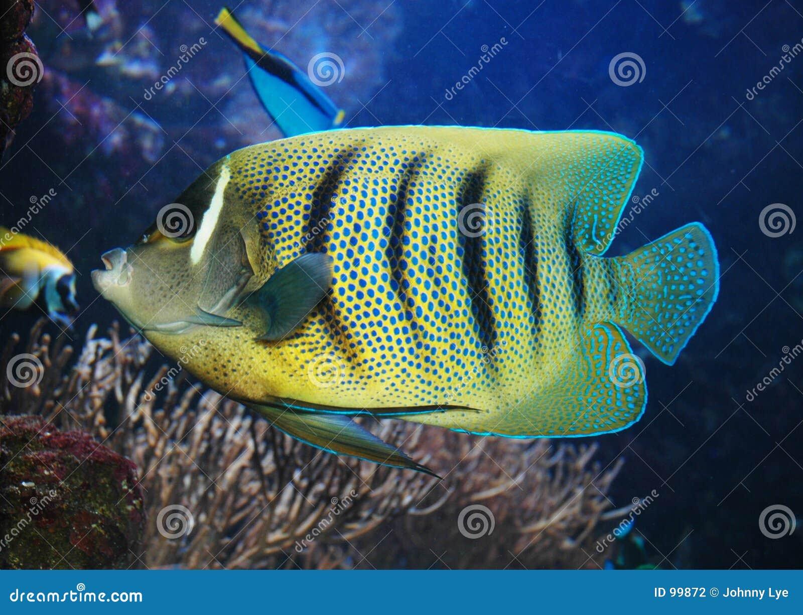 Fiskflotta