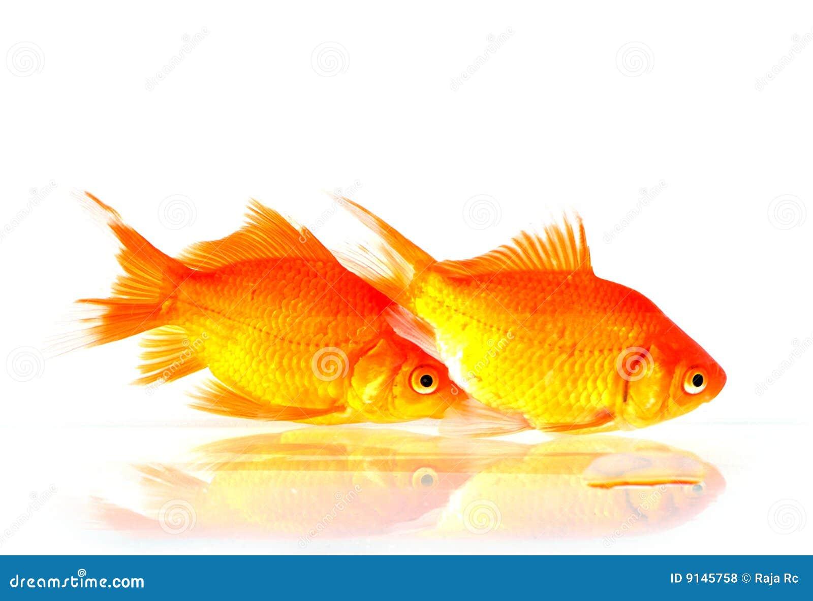 Fiskguld