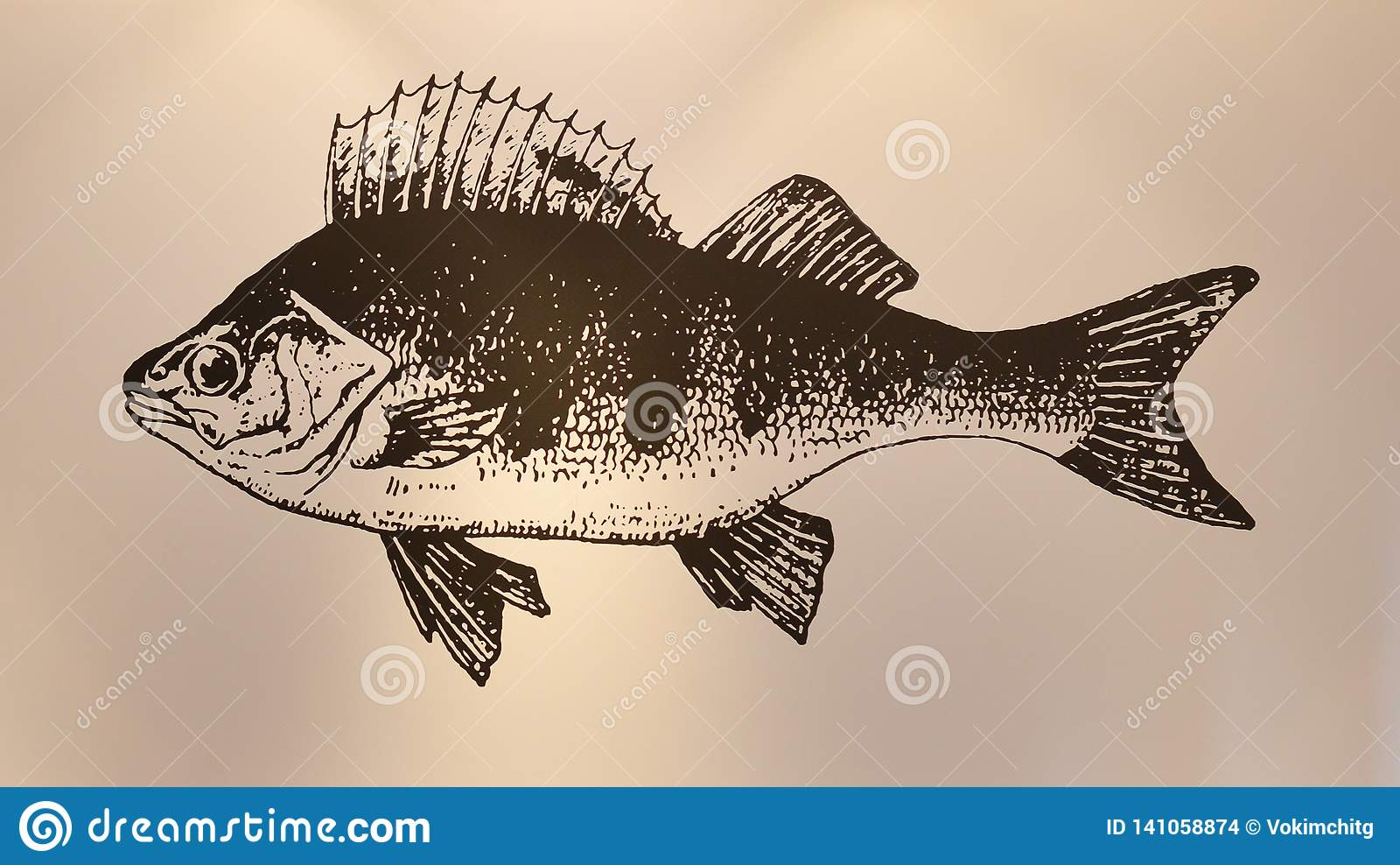 Fiskmålning på väggen