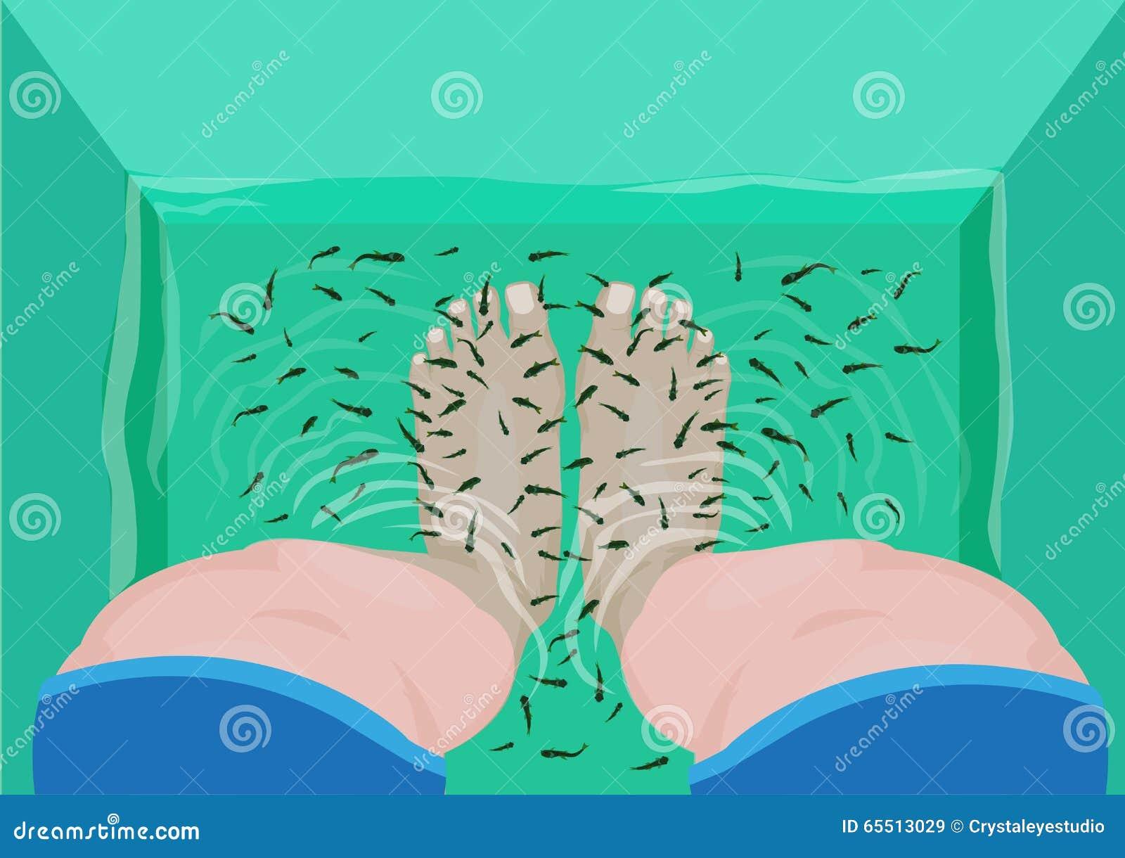 Fiskpedikyr- eller massagebegrepp Den bästa sikten av fot i en Spa massage badar fyllt med rufa för doktor Fish eller Garra Redig