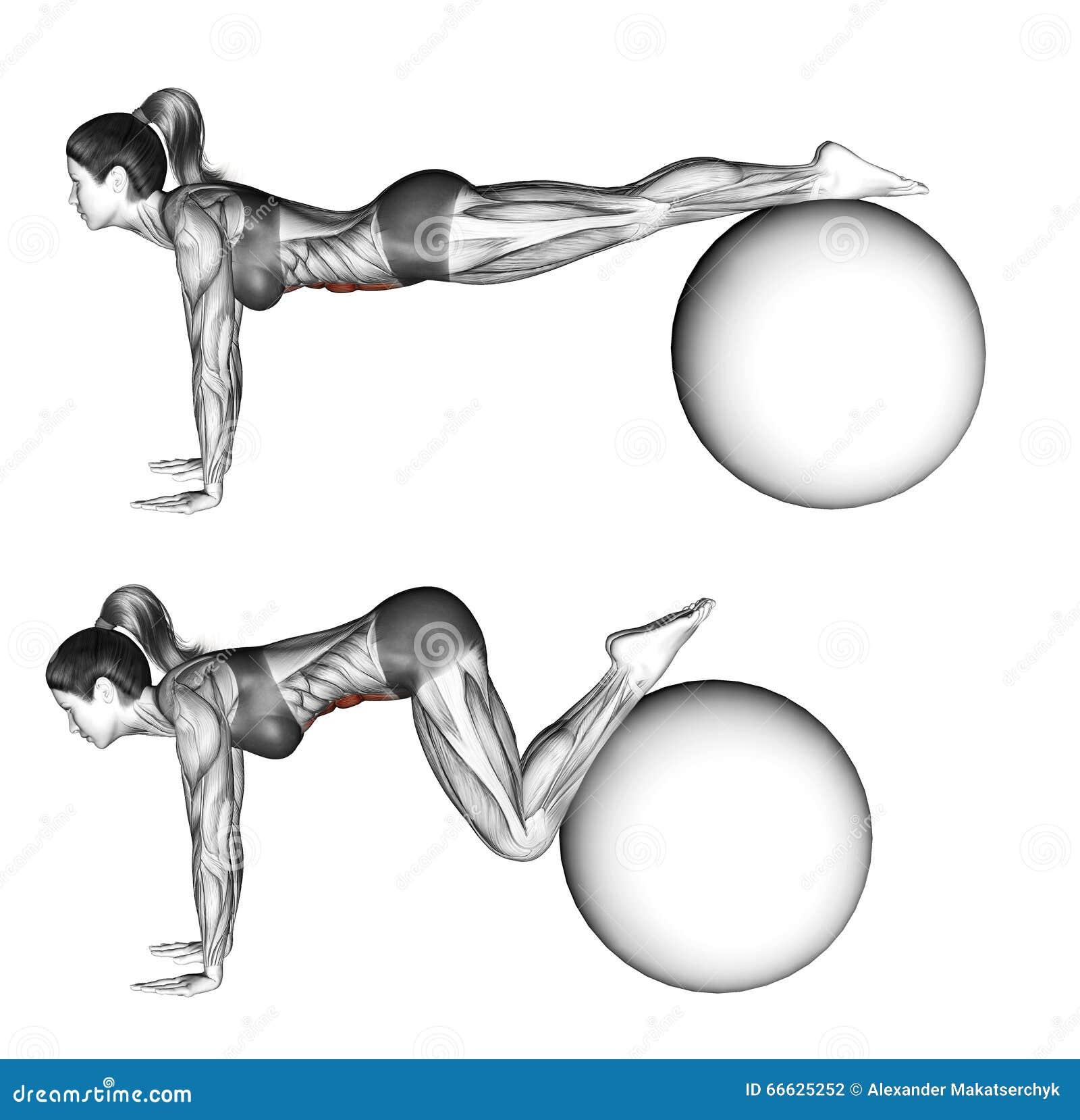 Fitball Exercising. Ball Pull-in. Female Stock ...