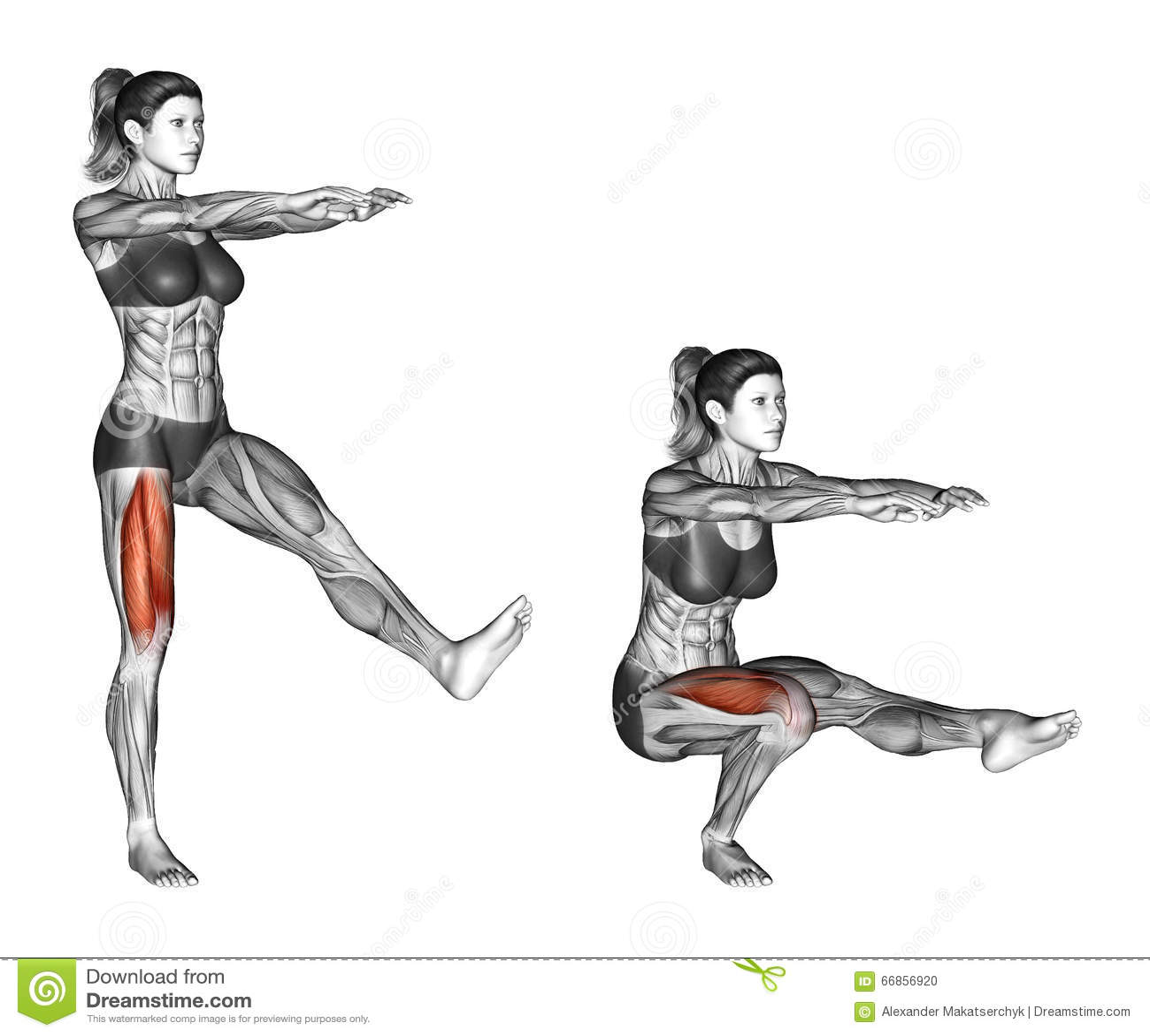 squat and deadlift manual pdf