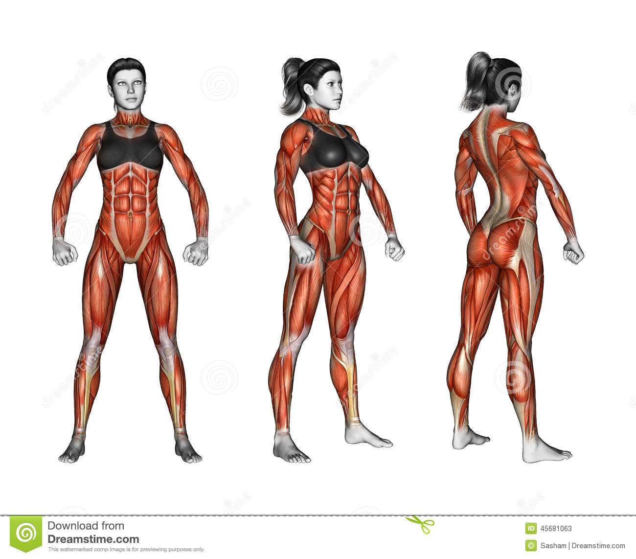 exercising. projection of the human body. showing stock, Muscles