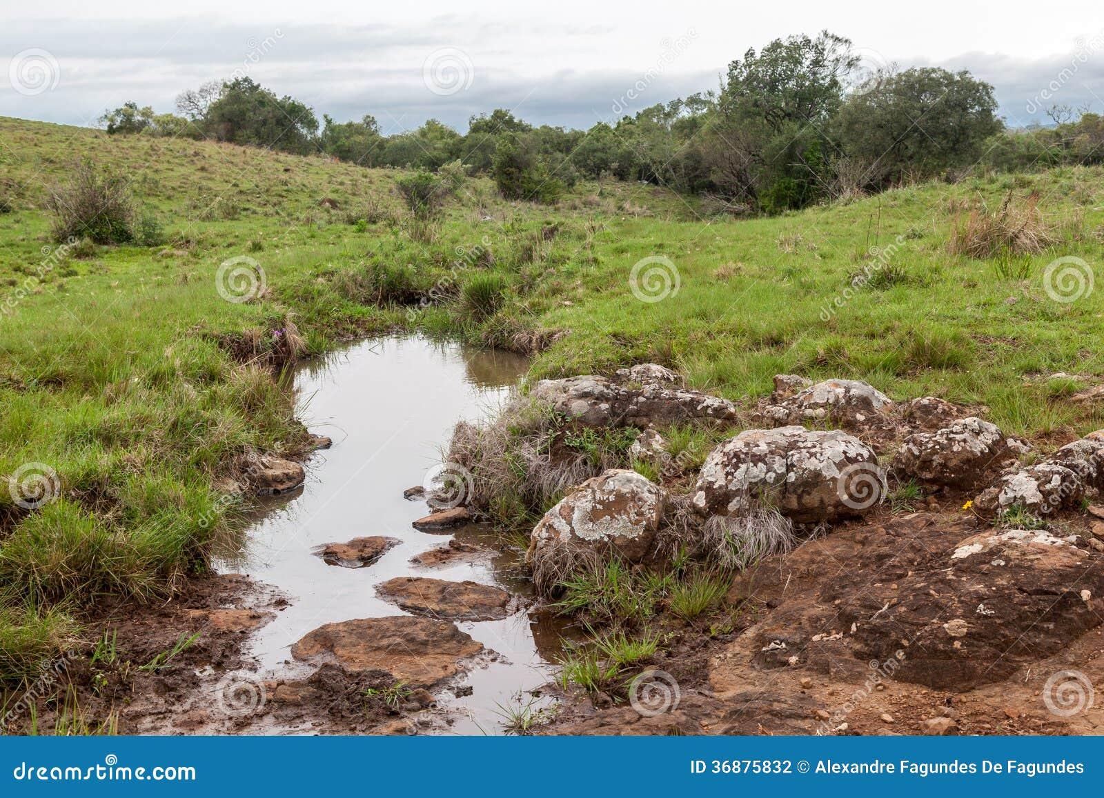 Download Fiume in azienda agricola fotografia stock. Immagine di latino - 36875832