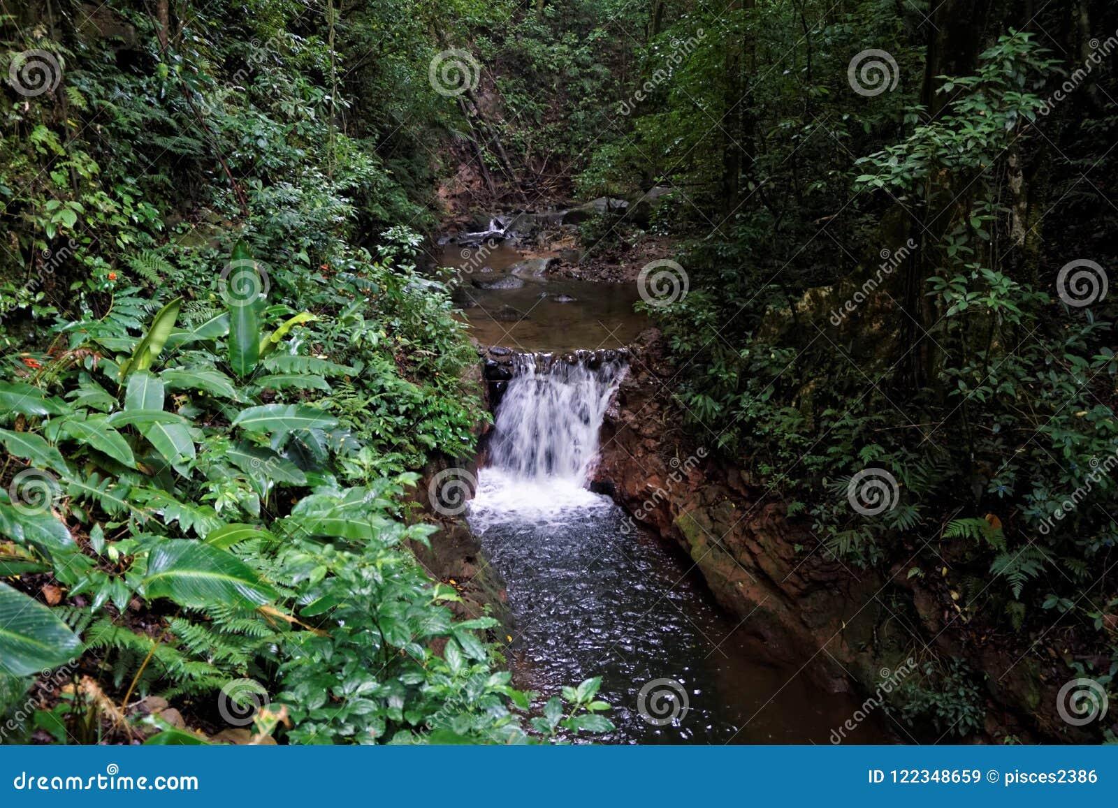 Fiume nella riserva di Curi Cancha, Monteverde