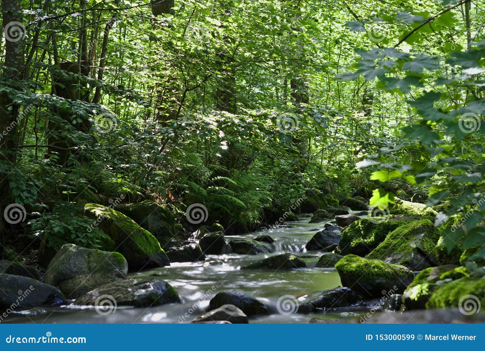 Fiume selvaggio nel legno del Ravennaschlucht