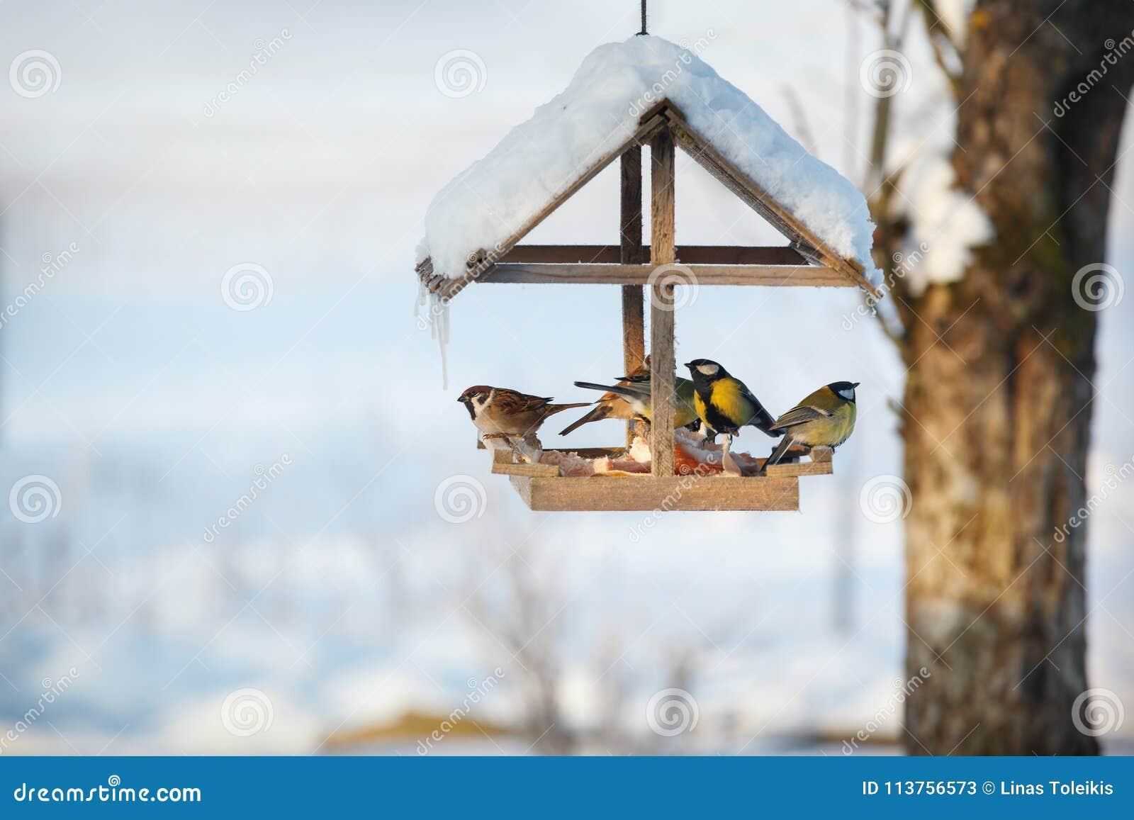 Five birds in the feeder