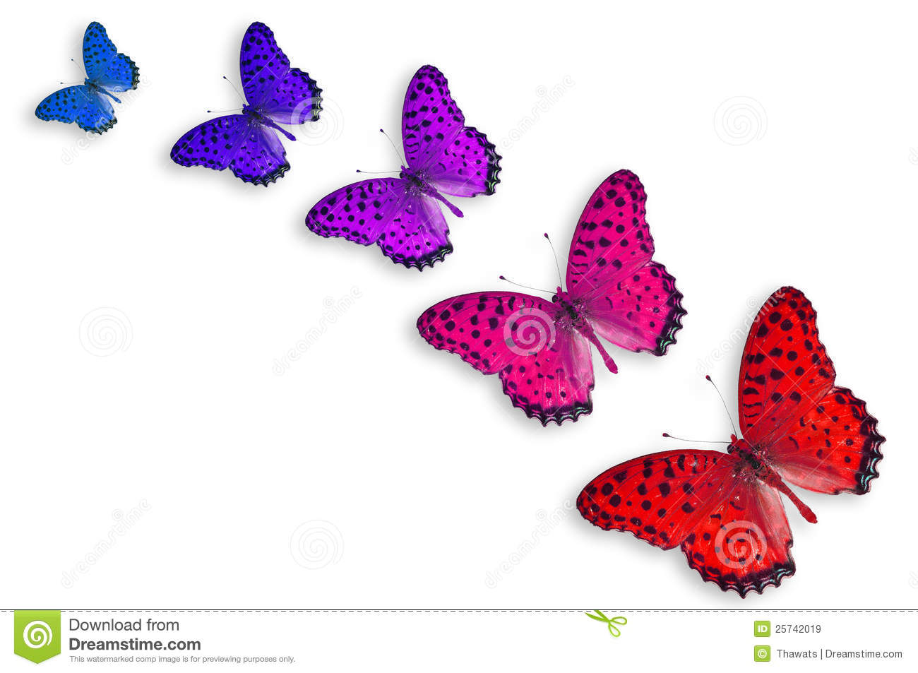 Five Color Butterflies Royalty Free Stock Images - Image: 25742019