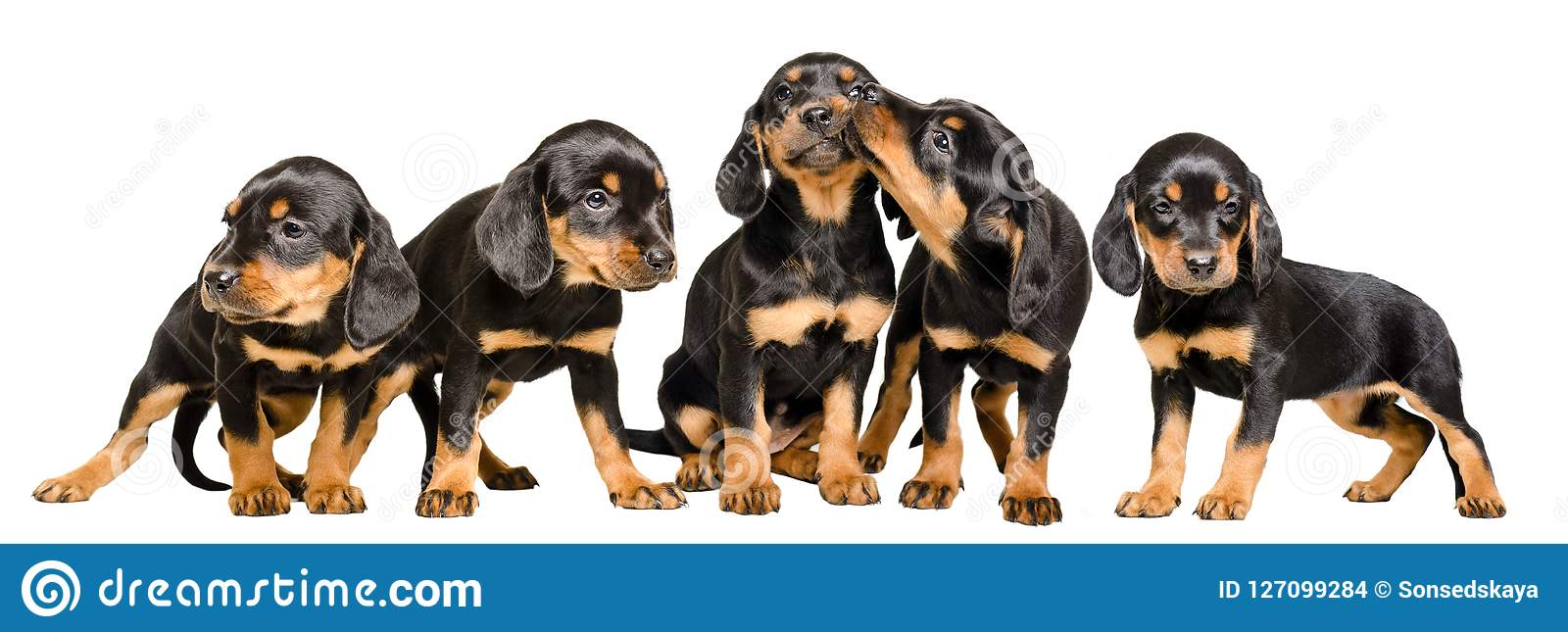 Five cute puppies together