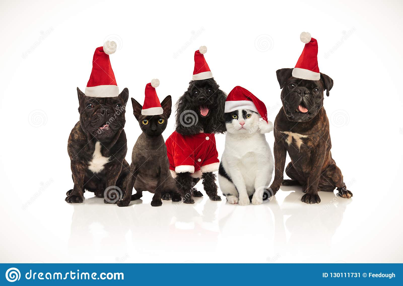 Five cute santa cats and dogs sitting and panting