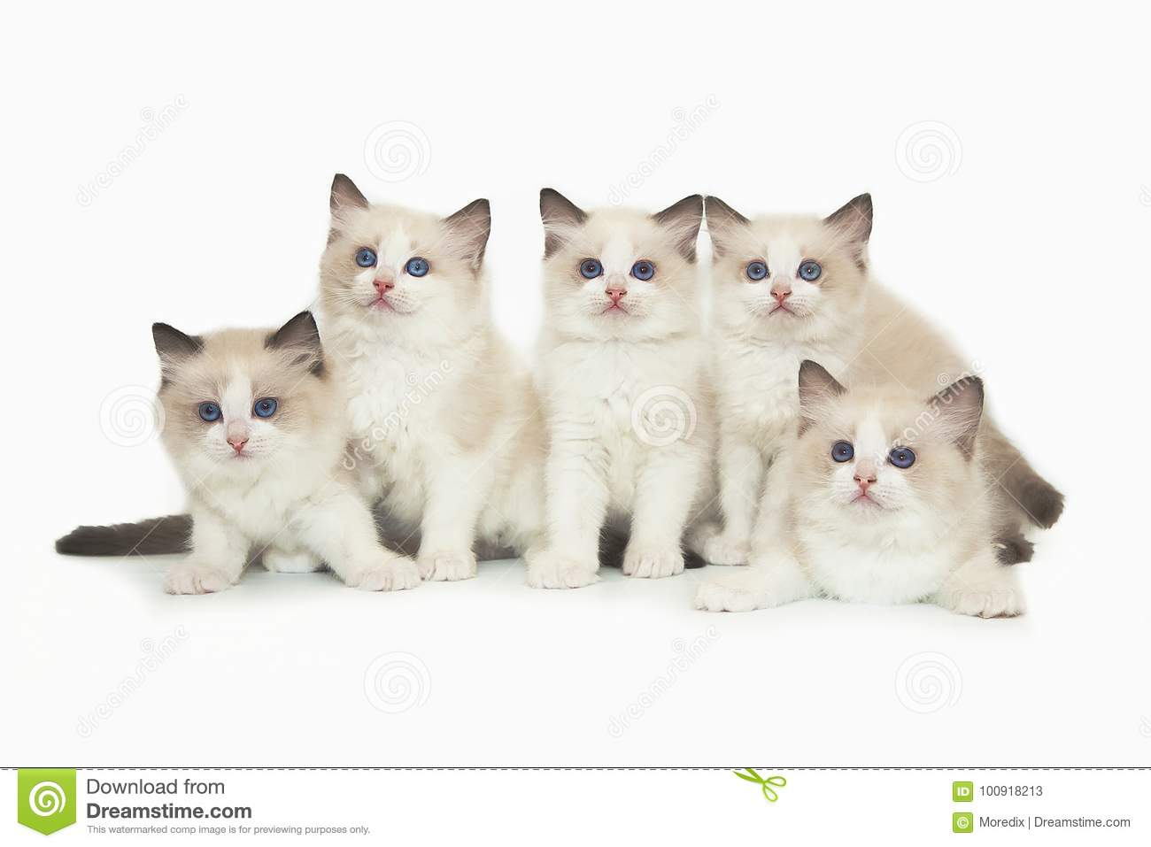 15 Blind Cats That Never Gave Up - Number 11 Is So ...   White Cats Blue Background