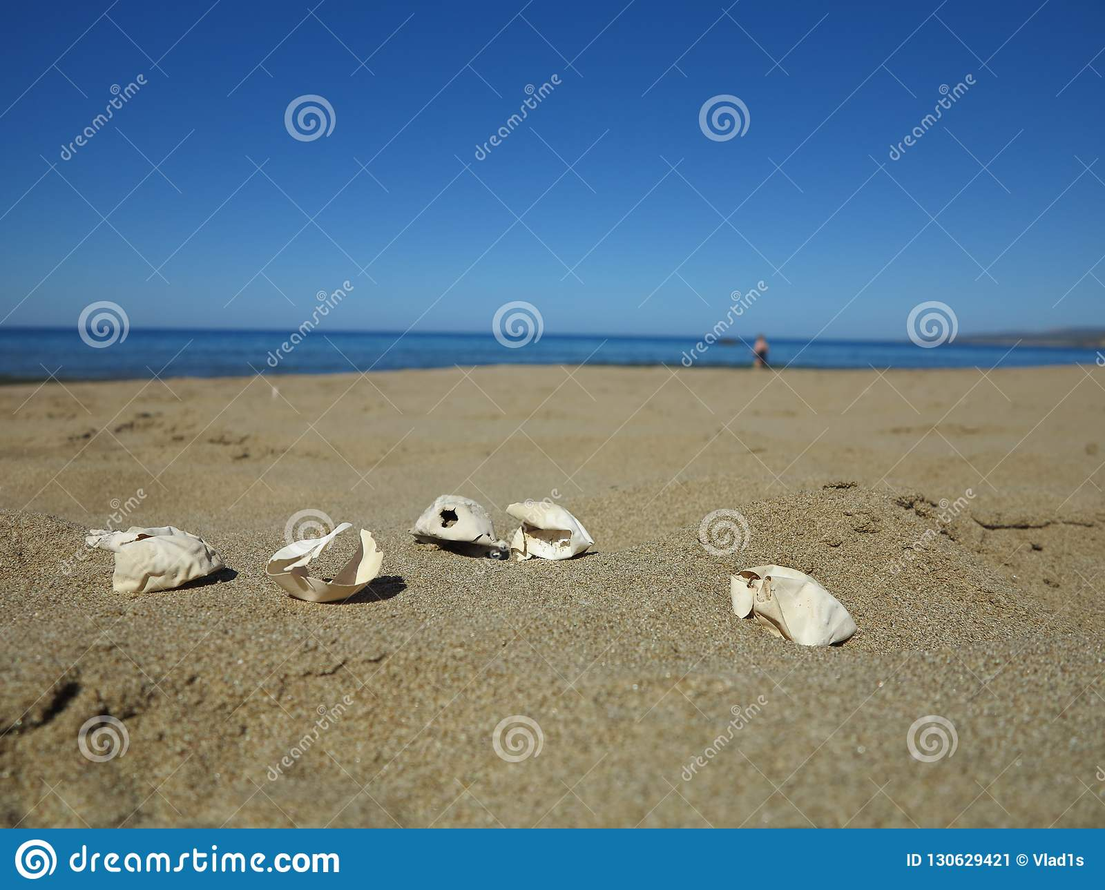 Five eggs of Loggerhead turtle on ther beach on Cyprus